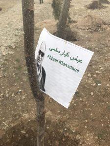 درختکاری مزار عباس کیارستمی
